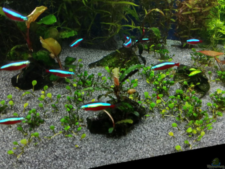 gallery of aquarium decoration japonaise with aquarium decoration japonaise. Black Bedroom Furniture Sets. Home Design Ideas