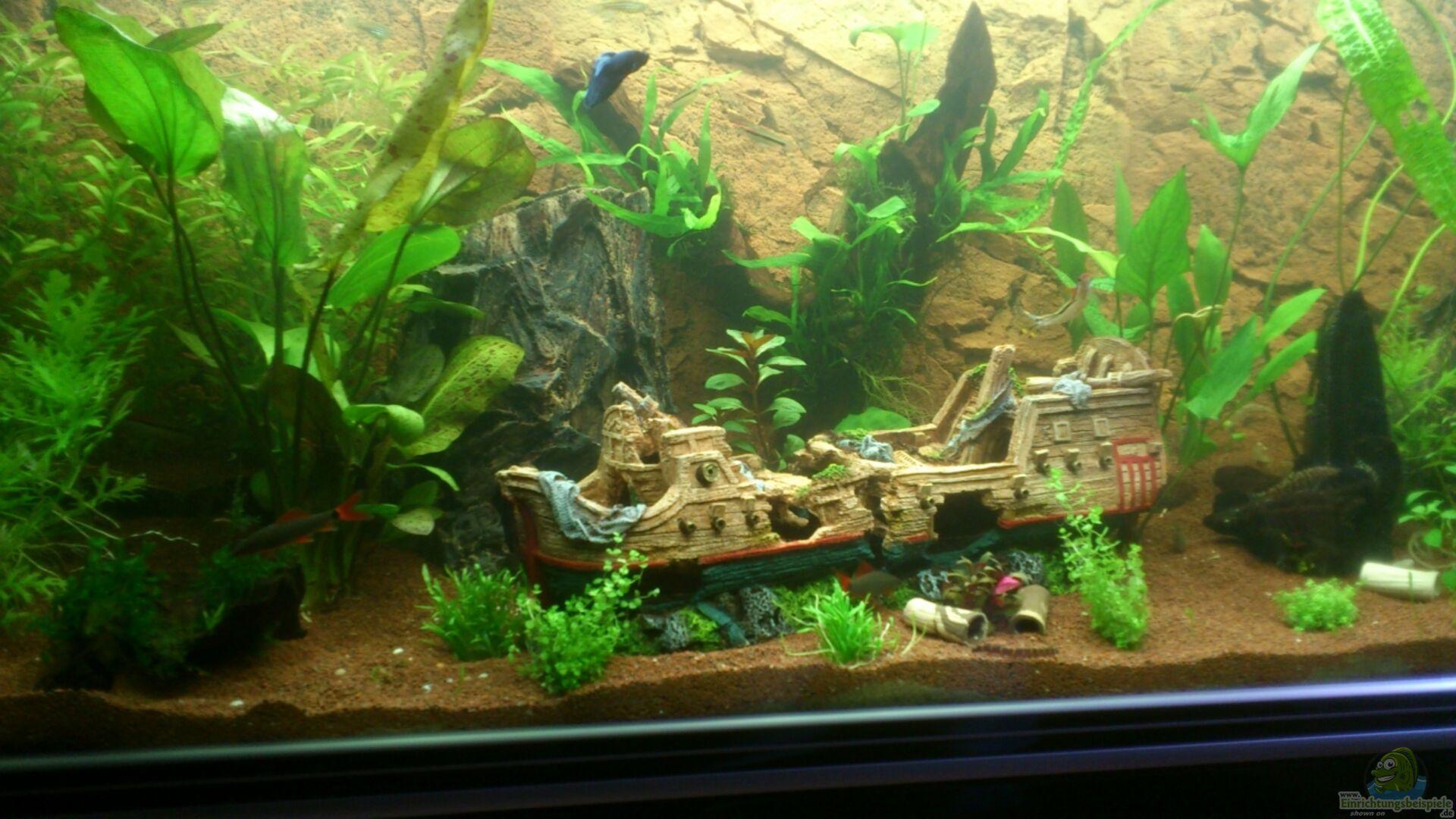 Aquarium von schakal becken 22188 for Aquarium becken