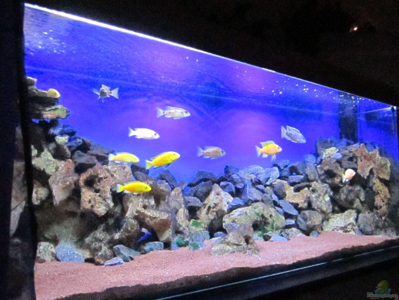 aquarium von malawi dude 22218 deep blue malawi. Black Bedroom Furniture Sets. Home Design Ideas