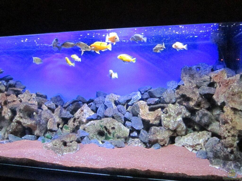 aquarium von malawi dude deep blue malawi. Black Bedroom Furniture Sets. Home Design Ideas