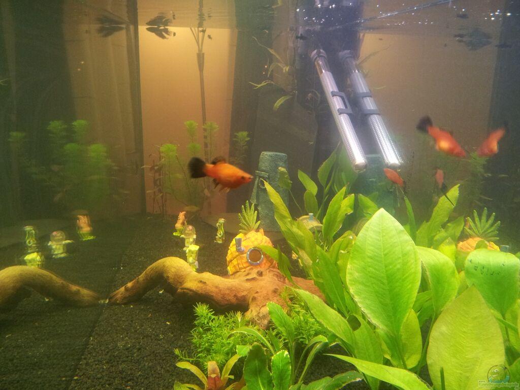 Aquarium von olik becken 22224 for Kampffisch becken