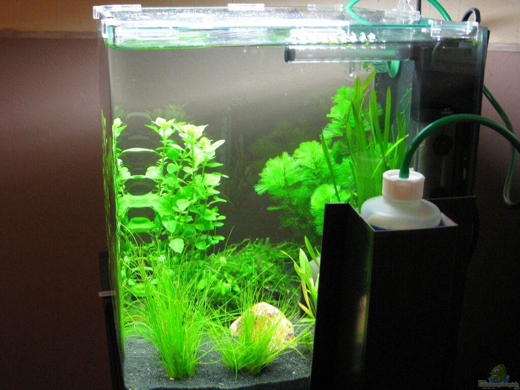 aquarium von jens nessenius dennerle 30l nano cube. Black Bedroom Furniture Sets. Home Design Ideas
