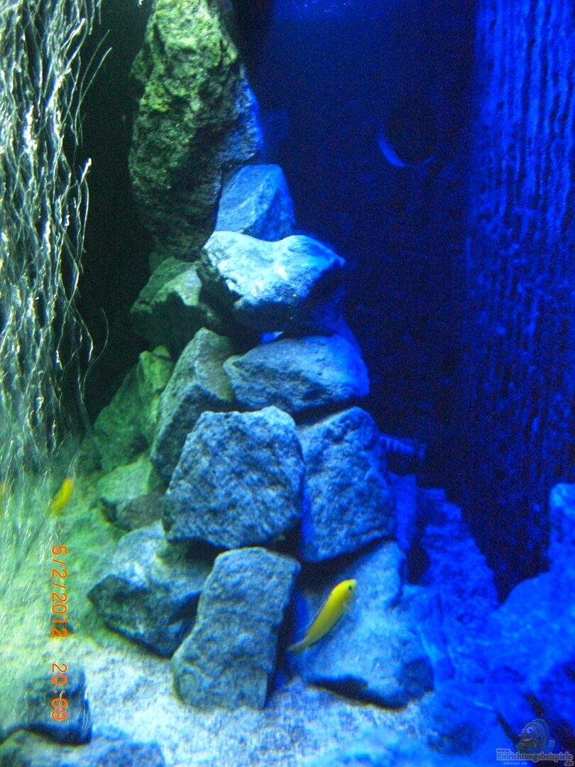 aquarium von christopher ro 22253 malawi seaside. Black Bedroom Furniture Sets. Home Design Ideas