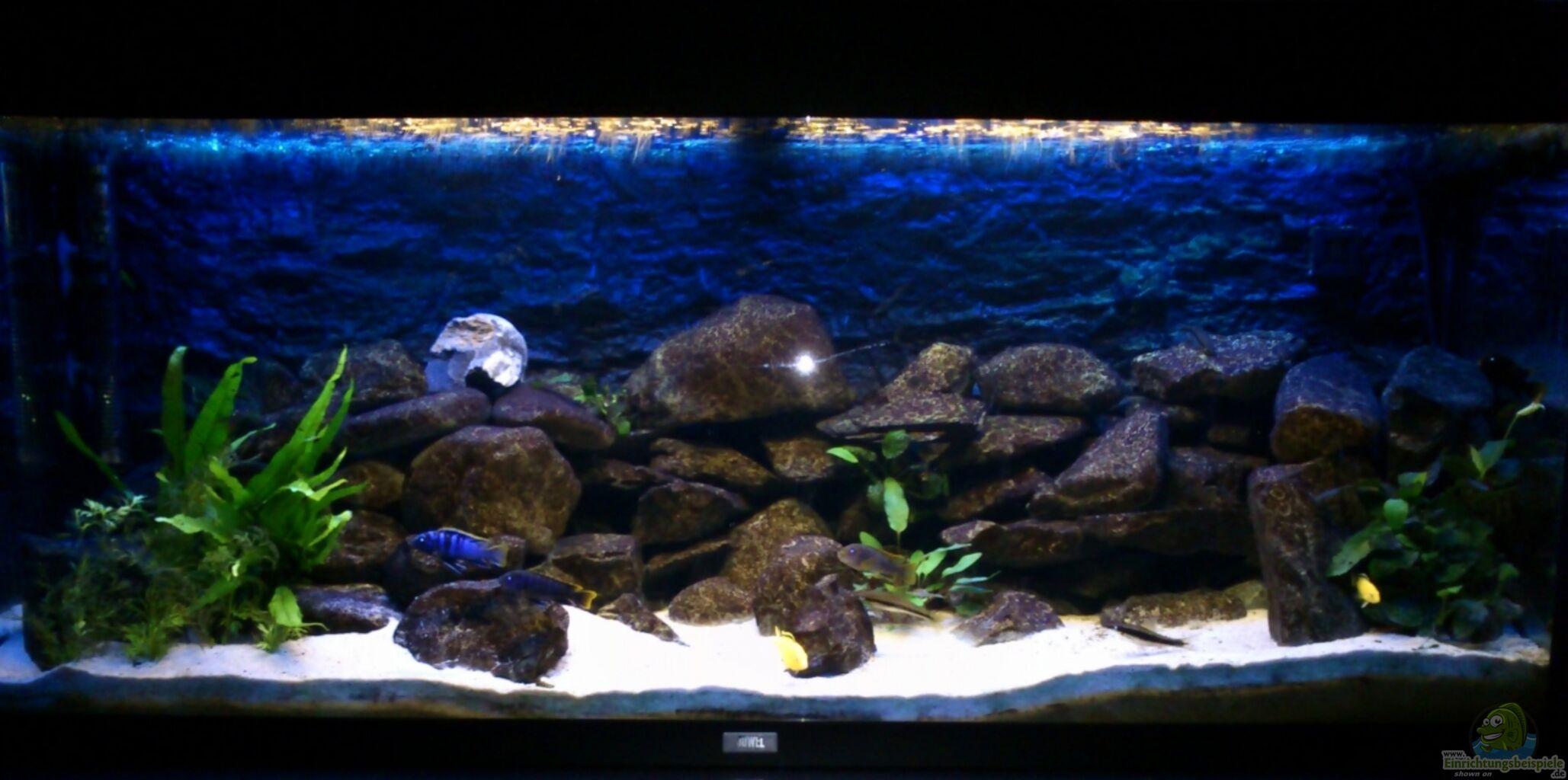 aquarium von stulli mein erstes malawibecken. Black Bedroom Furniture Sets. Home Design Ideas