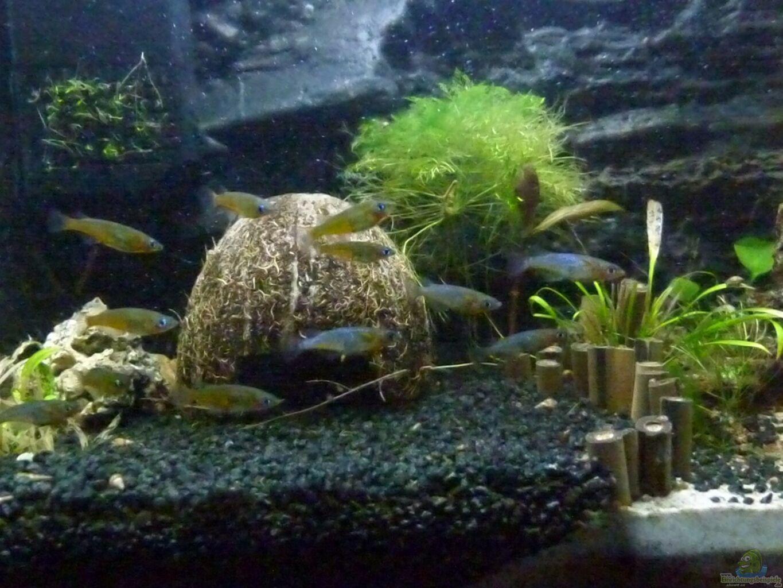 aquarium von goldfischfan oryzias becken 39l. Black Bedroom Furniture Sets. Home Design Ideas