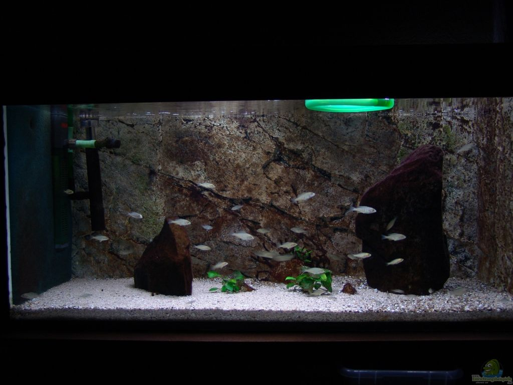 aquarium von spaceace malawi aufzuchtsbecken. Black Bedroom Furniture Sets. Home Design Ideas