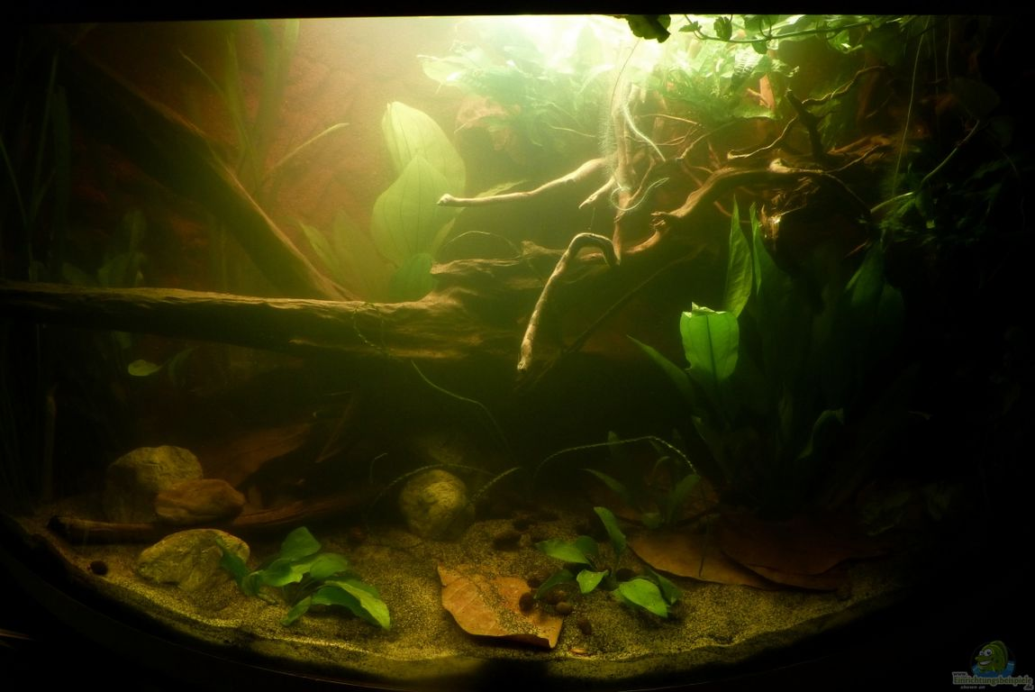 aquarium von marco my southamerican corner tank. Black Bedroom Furniture Sets. Home Design Ideas