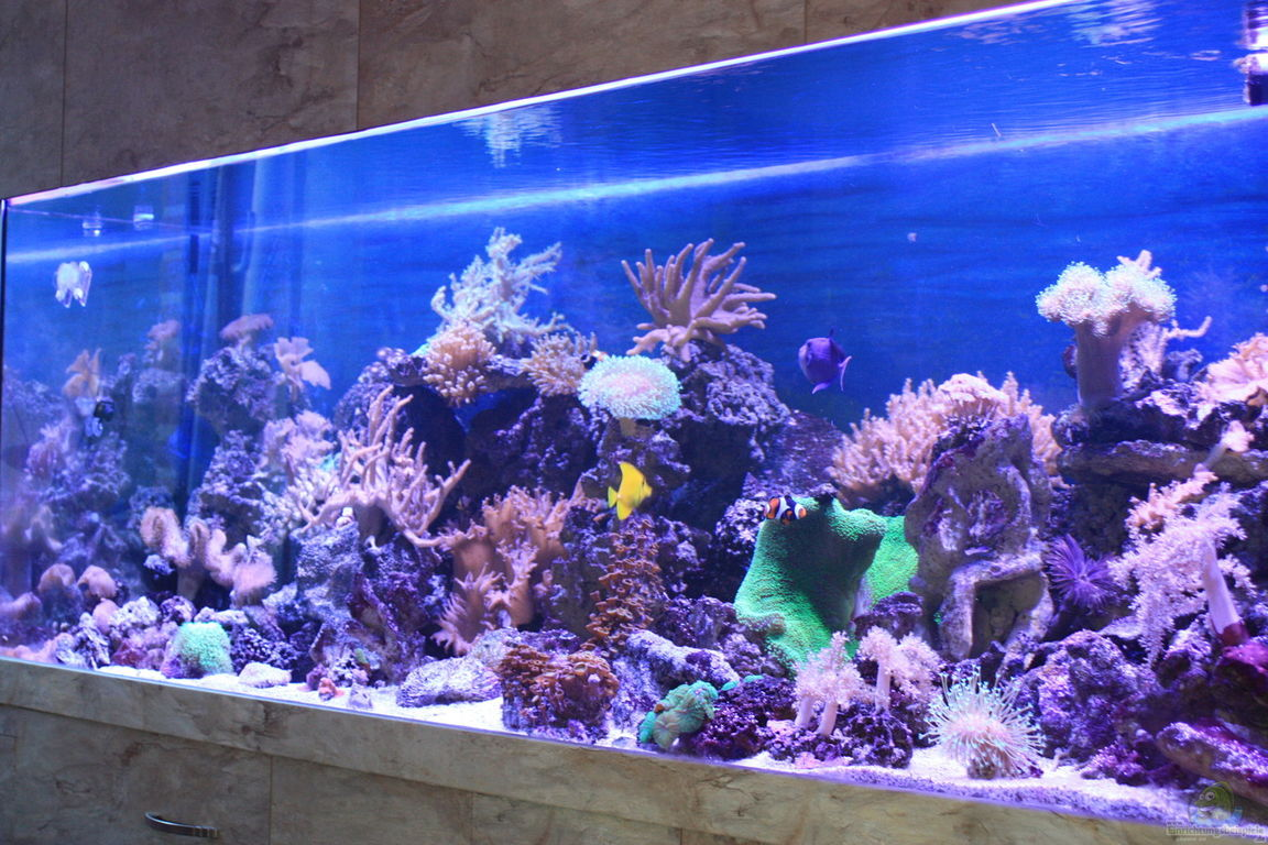 inspirationen meerwasser aquarium mit led beleuchtung stil startseite design bilder. Black Bedroom Furniture Sets. Home Design Ideas
