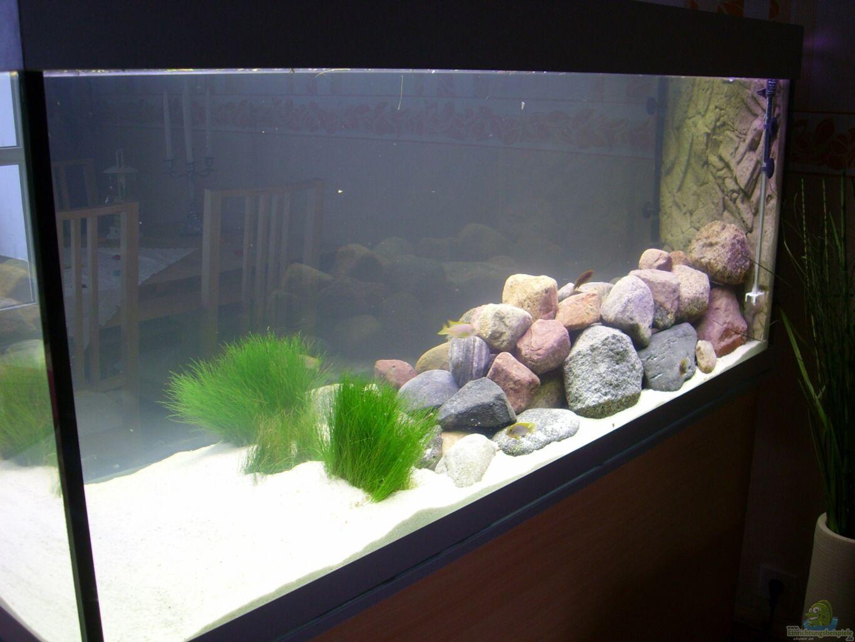 aquarium von thomas sa malawibecken 540 l. Black Bedroom Furniture Sets. Home Design Ideas