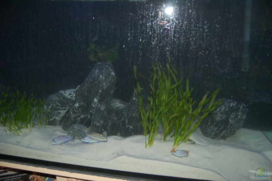 aquarium von calimero mein r uberbecken. Black Bedroom Furniture Sets. Home Design Ideas