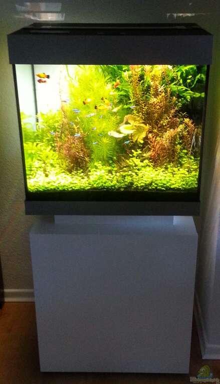 aquarium von michael friede juwel lido 120. Black Bedroom Furniture Sets. Home Design Ideas