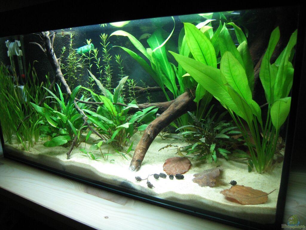 aquarium von nilsi nessi artbecken aspidoras pauciradiatus. Black Bedroom Furniture Sets. Home Design Ideas