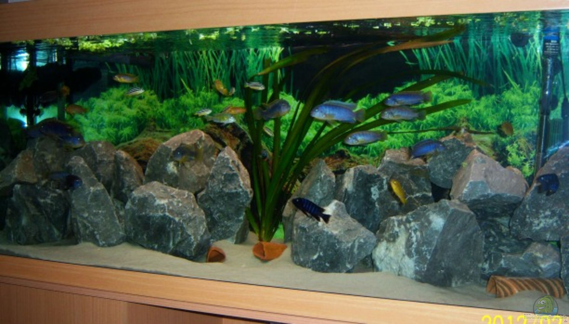 aquarium von 47 malawi 22453 malawie rock s. Black Bedroom Furniture Sets. Home Design Ideas