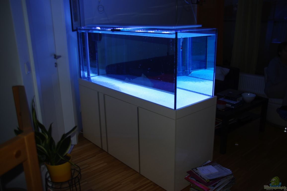 aquarium von dominik n becken 22455. Black Bedroom Furniture Sets. Home Design Ideas