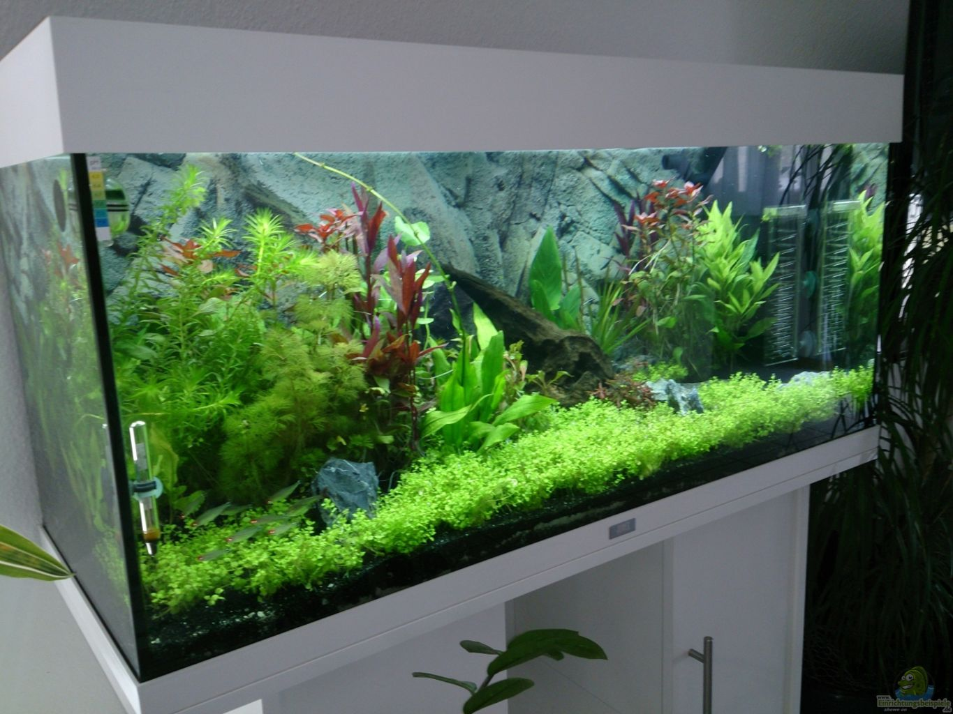 Example no 22482 from the category community tanks for Juwel aquarium