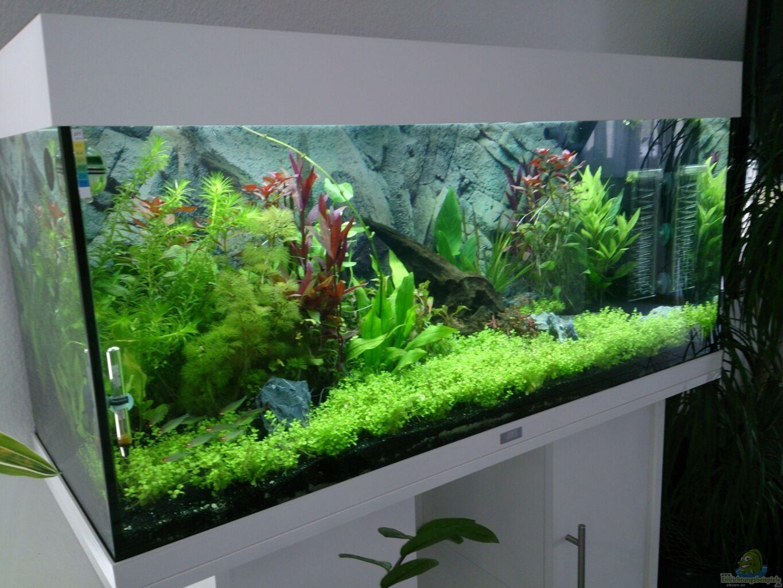 aquarium von franky juwel rio 180. Black Bedroom Furniture Sets. Home Design Ideas