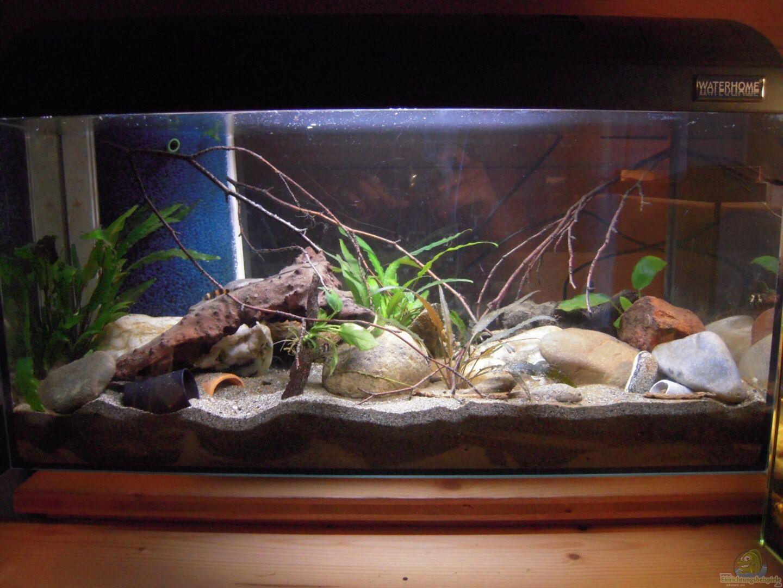 Aquarium hauptansicht von my little brachygobius doriae for Boden aquarium