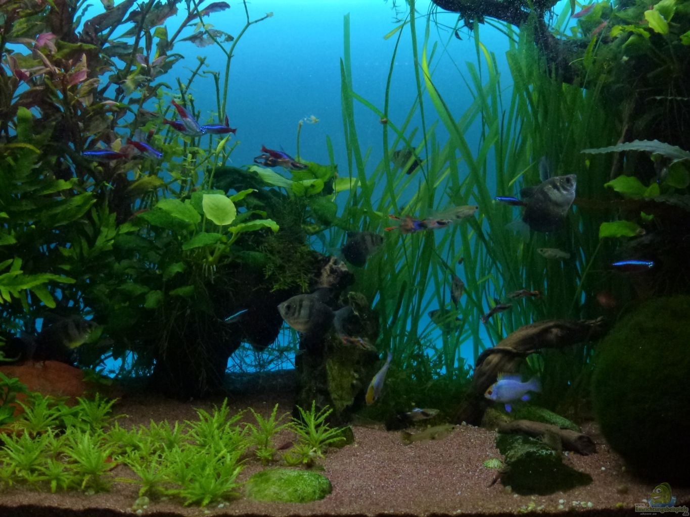 Example no 22524 from the category community tanks for Aquarium 120x40x50