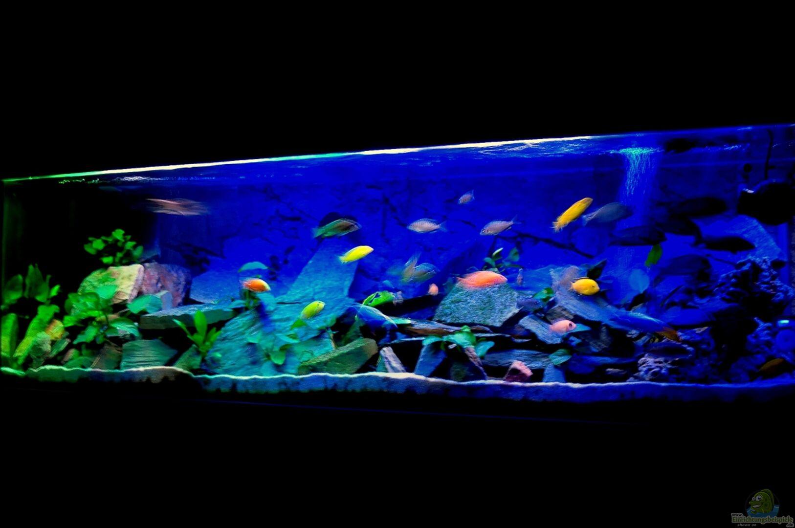 aquarium von wolfgang ihlo becken 22553. Black Bedroom Furniture Sets. Home Design Ideas