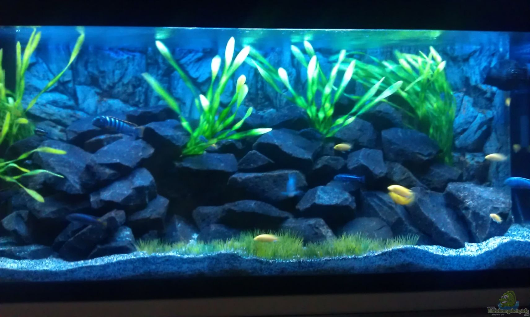 Aquarium von lohmi 5 stone edge for Aquarium edge