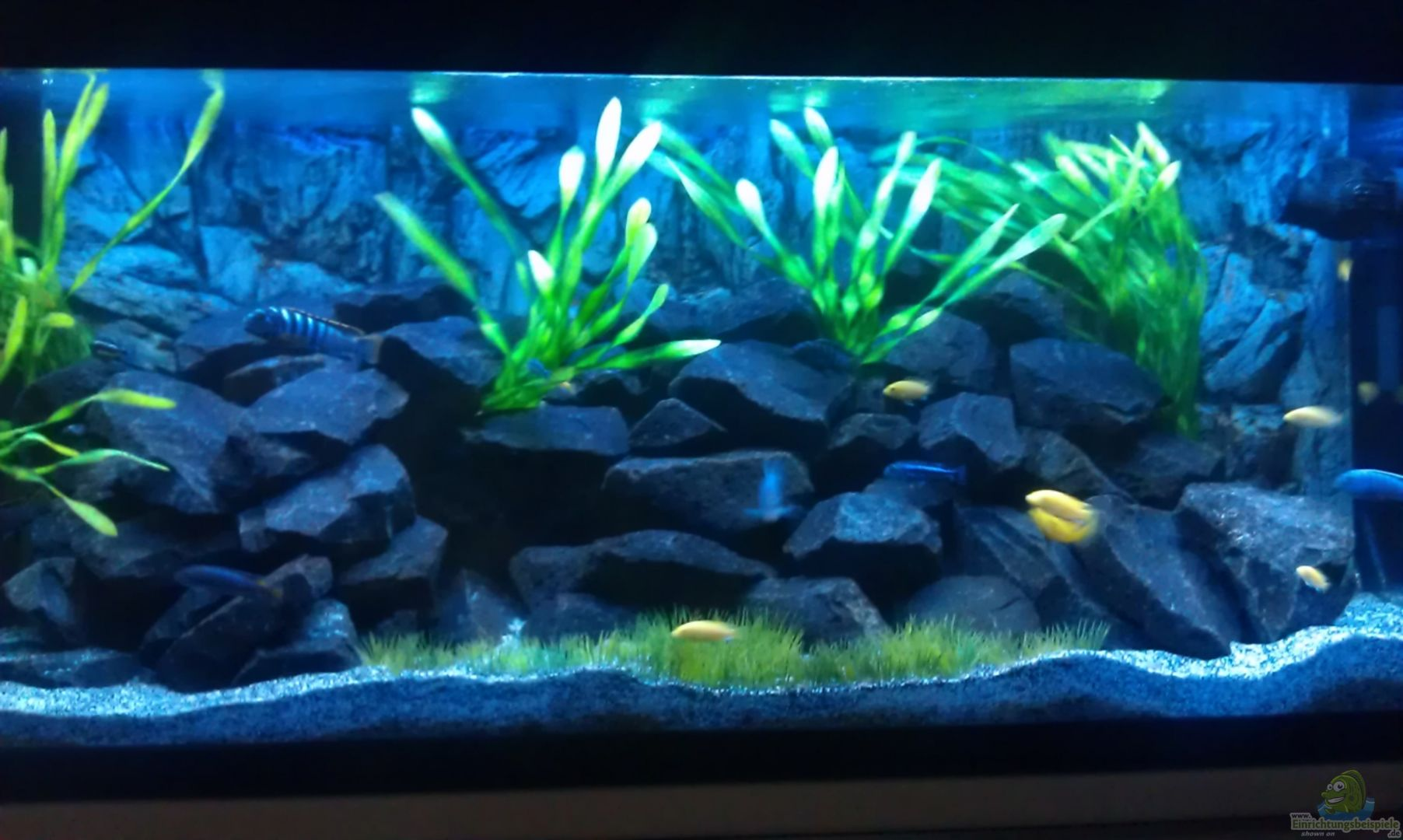Aquarium von lohmi 5 22562 stone edge for Aquarium 120x40x50
