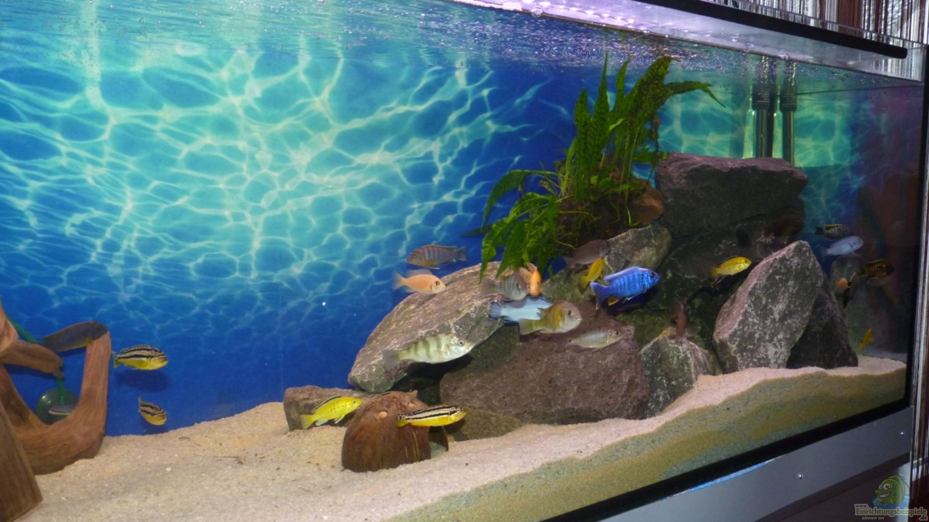 Aquarium von bandit12 becken malawi eu for Aquarium becken