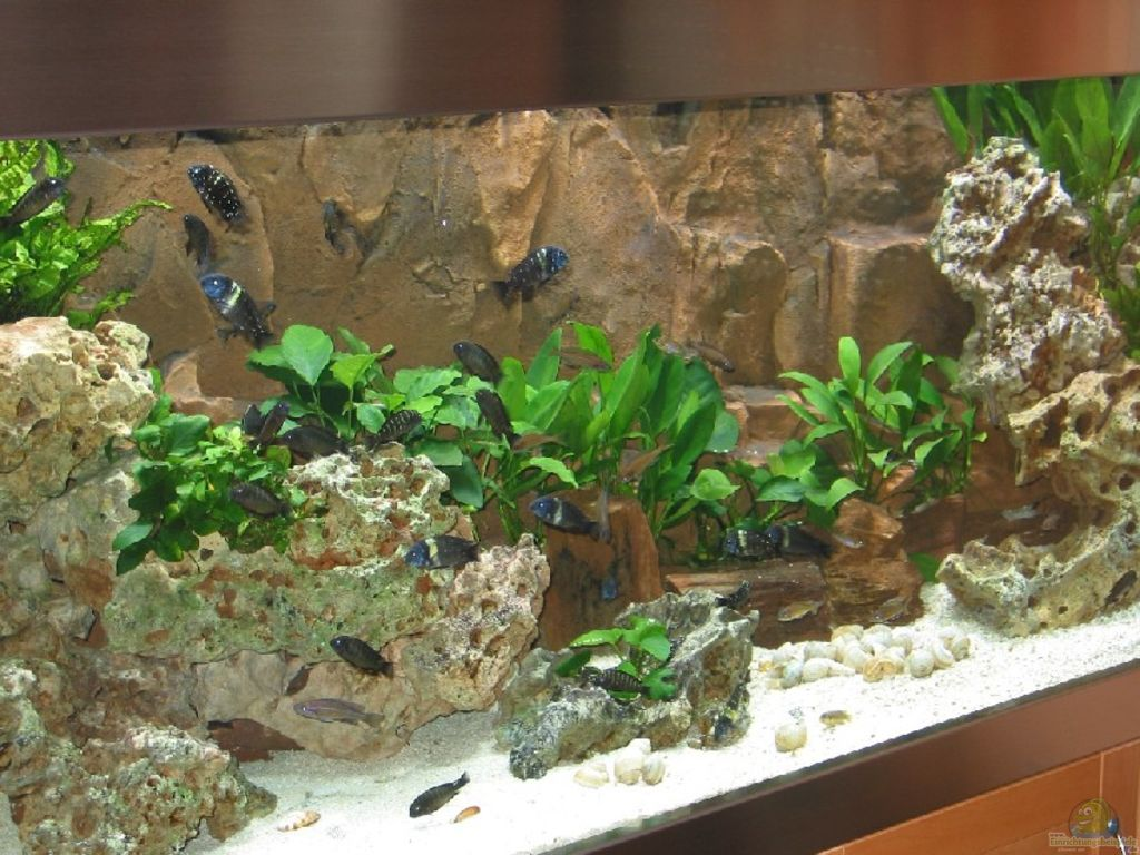 aquarium von matthias ehrhardt becken 226. Black Bedroom Furniture Sets. Home Design Ideas
