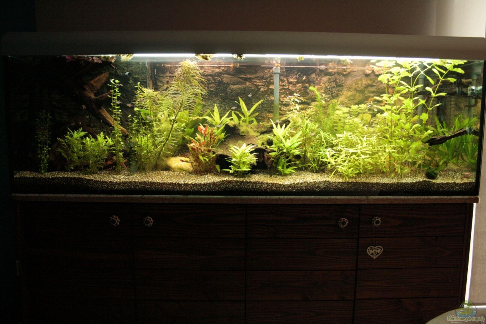 aquarium von hot becken 22655 einrichtungsbeispiele. Black Bedroom Furniture Sets. Home Design Ideas