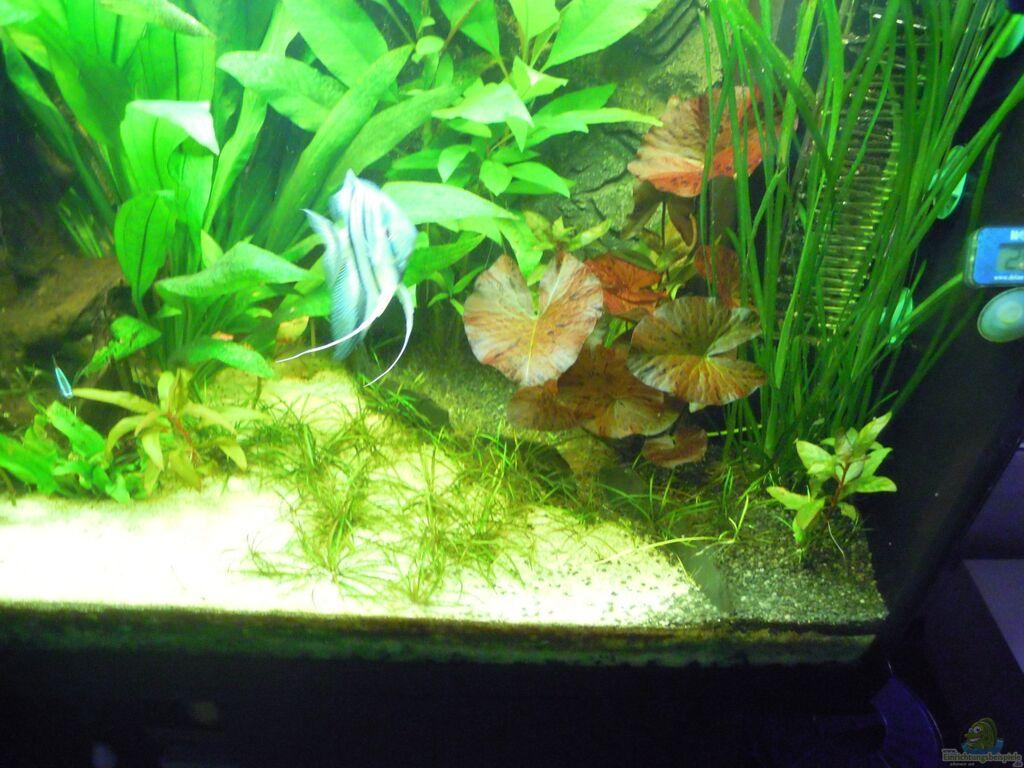 Teppich f r wohnzimmer grau for Aquarium wohnzimmertisch