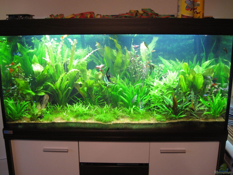 Jan16 jans blaupunktbuntbarsch pflanzenbecken for Aquarium einrichtung