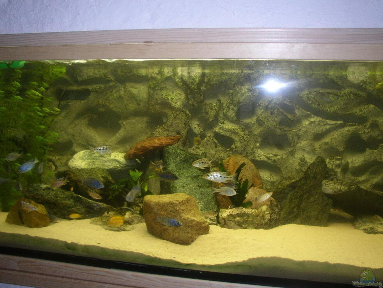 aquarium von sabine deiters becken 227. Black Bedroom Furniture Sets. Home Design Ideas