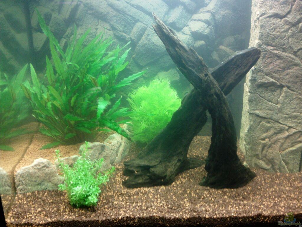 mein aquarium spiel