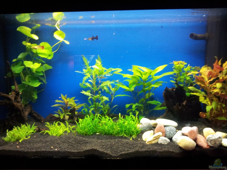 aquarium von shiml 22713 110 l gesellschaft. Black Bedroom Furniture Sets. Home Design Ideas