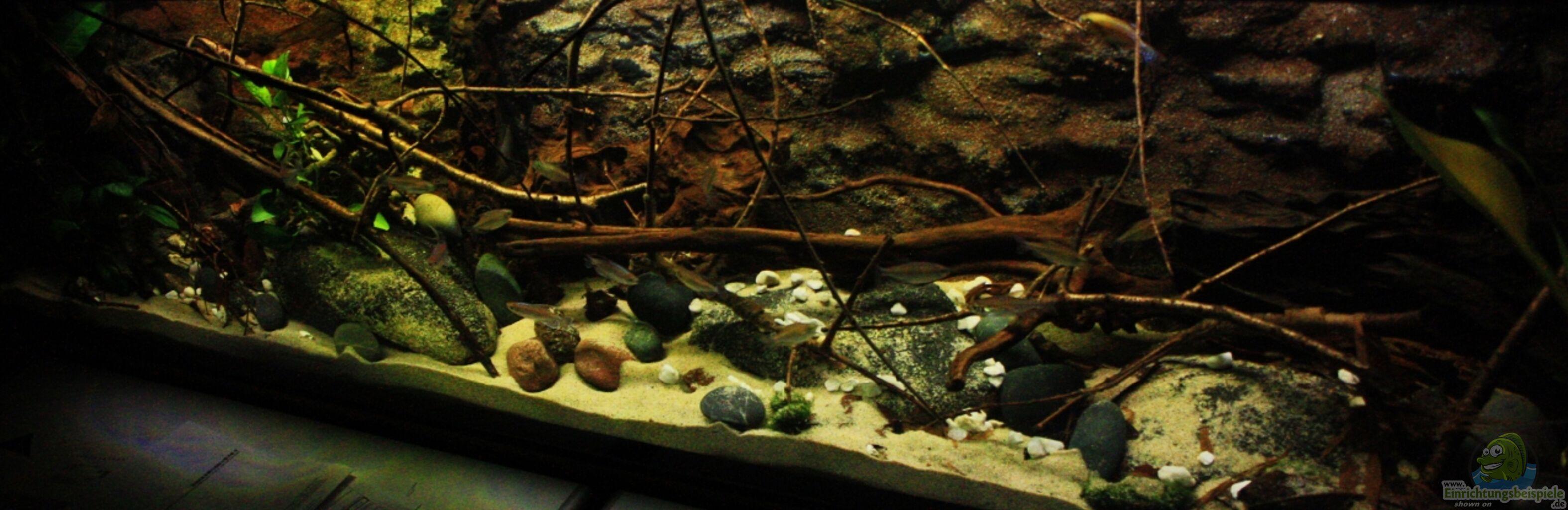 Blogartikel Gestaltung im Aquarium, der Natur angepasst, es ist so ...