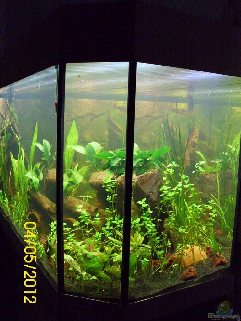 Aquarium Raumteiler Südamerika/Gesb. Nur Noch Als Beispiel