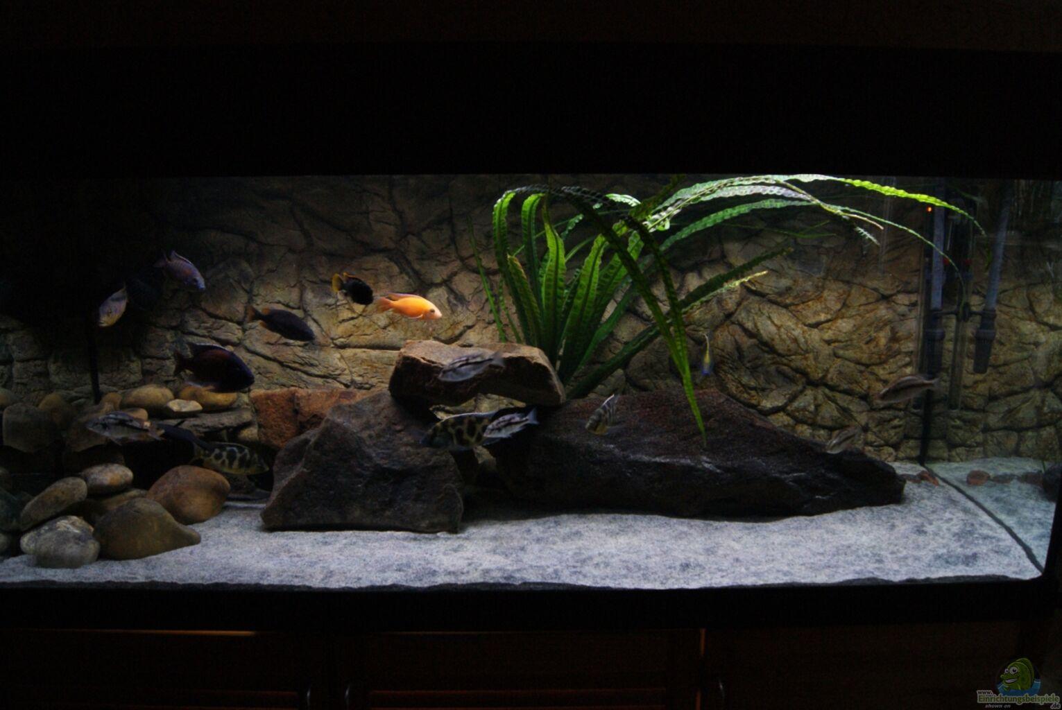 aquarium von sascha g malawimix. Black Bedroom Furniture Sets. Home Design Ideas
