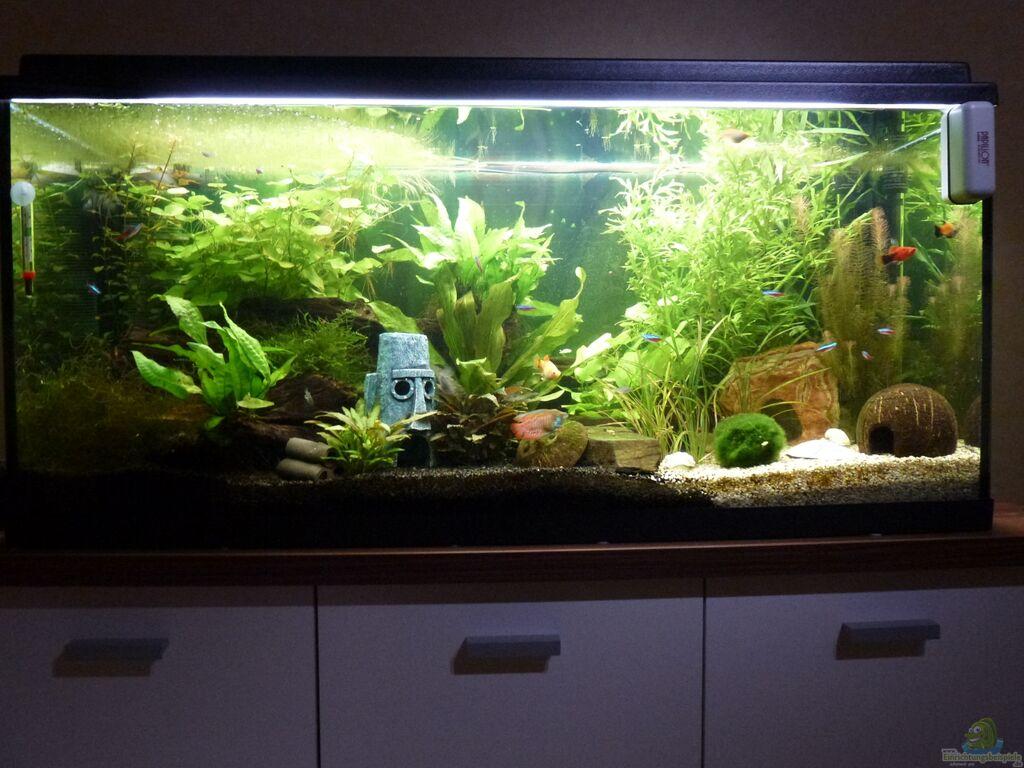 aquarium von jessi daniel natureland. Black Bedroom Furniture Sets. Home Design Ideas