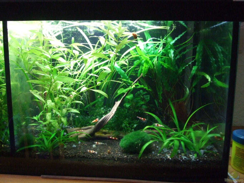aquarium von w lfchen garnelen doppelbecken. Black Bedroom Furniture Sets. Home Design Ideas