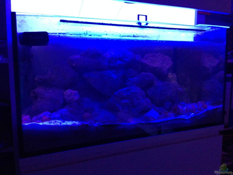 aquarium von tobsen tanganjika becken. Black Bedroom Furniture Sets. Home Design Ideas