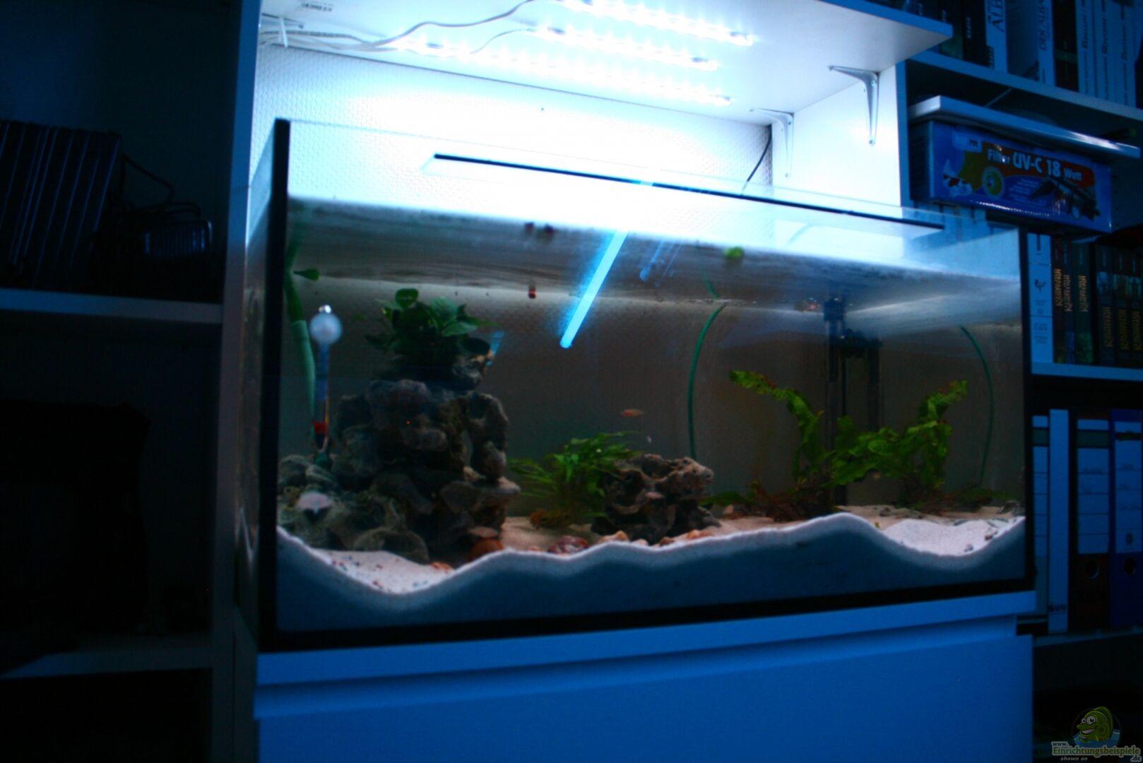 aquarium von tobsen 22896 tanganjika becken. Black Bedroom Furniture Sets. Home Design Ideas