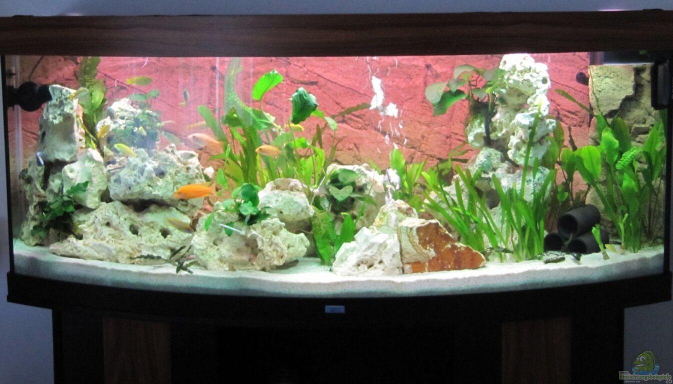 aquarium von andreas novak becken 22922. Black Bedroom Furniture Sets. Home Design Ideas