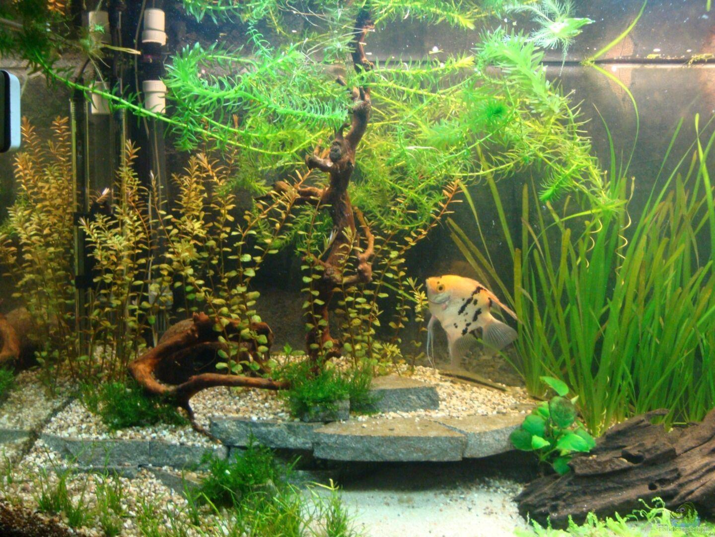 aquarium von marina 22928 gesellschaftsbecken. Black Bedroom Furniture Sets. Home Design Ideas