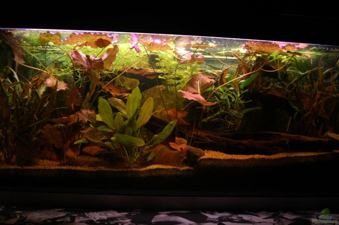 aquarium von mad marder s damerikabecken. Black Bedroom Furniture Sets. Home Design Ideas