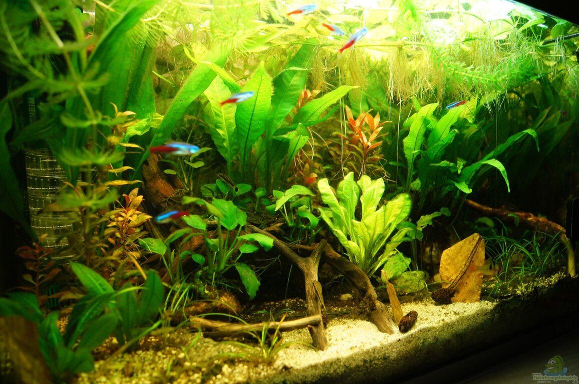 aquarium kies rechner erdaushub berechnen f r mutterboden. Black Bedroom Furniture Sets. Home Design Ideas