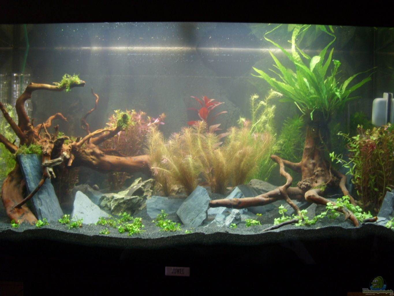 Aquarium von alex simon becken 22972 for Boden aquarium