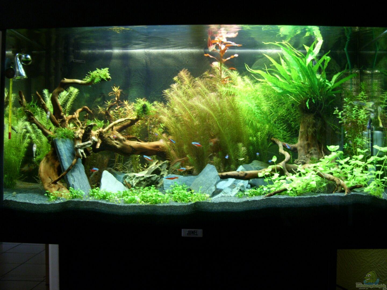 aquarium von alex simon becken 22972. Black Bedroom Furniture Sets. Home Design Ideas