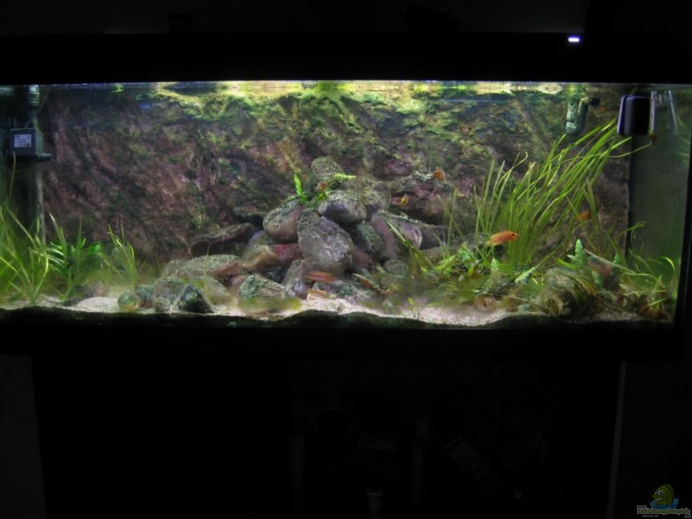 Aquarium von giuseppe sartorio becken 2303 for Aquarium 120x40x50