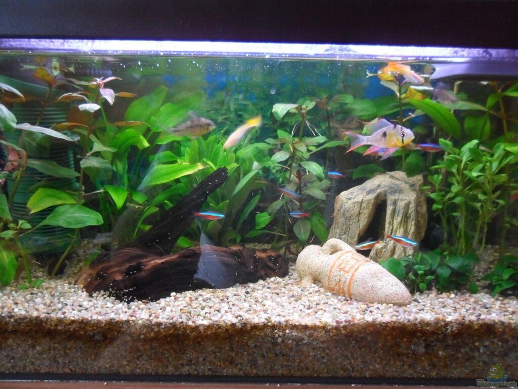 Aquarium von mccena 54 liter gesellschaftsbecken for Aquarium einrichtungsideen