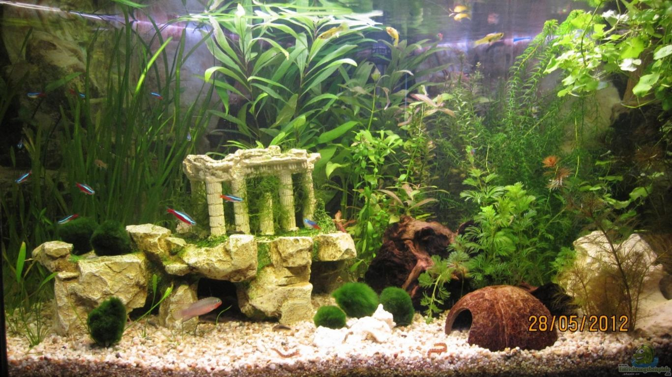 aquarium von wasserfloh 1 eck aquarium. Black Bedroom Furniture Sets. Home Design Ideas