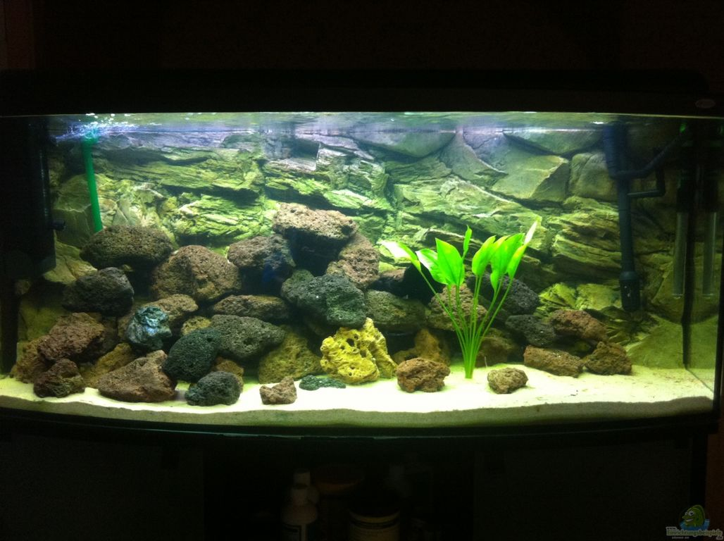 aquarium von patrick s becken 23037. Black Bedroom Furniture Sets. Home Design Ideas